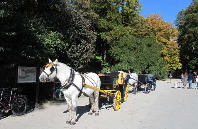 Traditionelle fahrt mit der Pferdekutsche am Chinesischen Turm